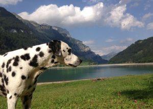 hunde-willkommen