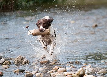 Haustier Sitting Hund am Wasser