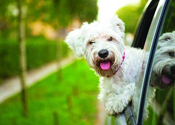 Haustier-Sitting Hundetaxi