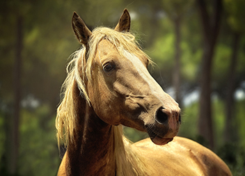 Haustier-Sitting Pferde
