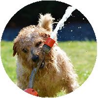 Haustier-Sitting Hunde