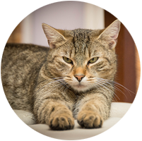 Haustier-Sitting Katzen