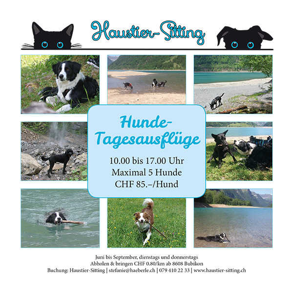 Haustier-Sitting: Hundeausflüge